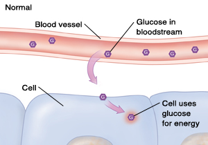 Cross section of blood vessel and cells showing normal glucose level.