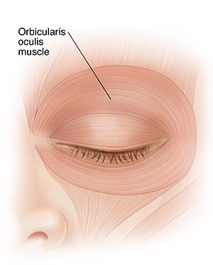 Front view of closed eye showing eyelid muscles.