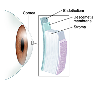 Side view of eye with inset showing layers of cornea.